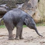 Říjnové slůně z pražské zoo už má jméno