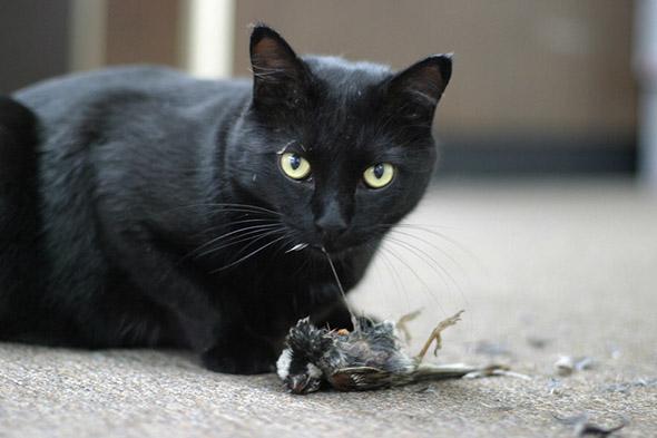 kočka s uloveným ptákem