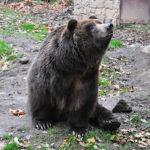 U medvědů grizzly v Děčíně – 3. díl