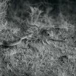 VIDEO: Had zaútočil, myš však byla rychlejší