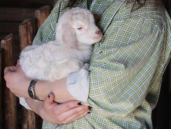 ovce domácí zoopark chomutov