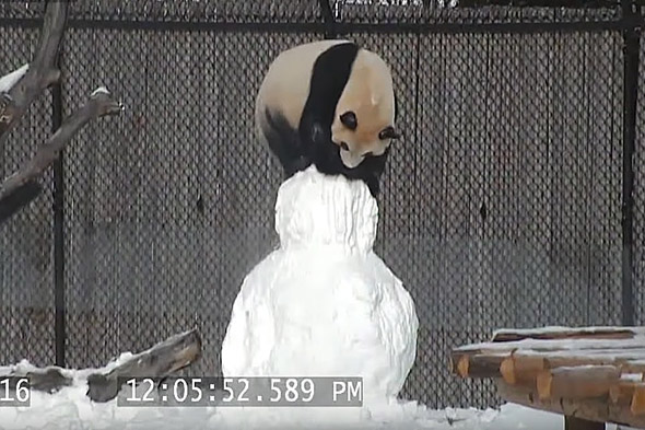 panda a sněhulák