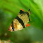 Akvarijní rybky pro začátečníky – 1. díl