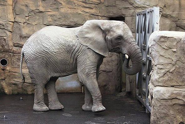 slon africký zoo Zlín