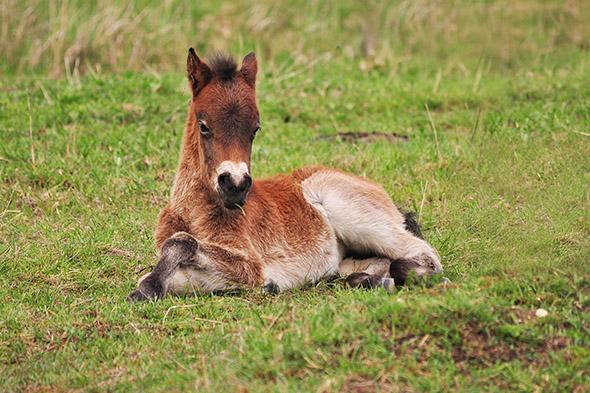 mládě divokého koně 2016