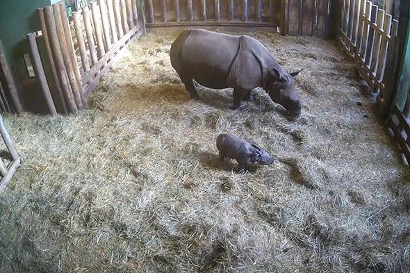 mládě nosorožce zoo Plzeň