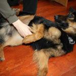 Proč pes při drbání škube nohou?