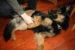 pes drbání