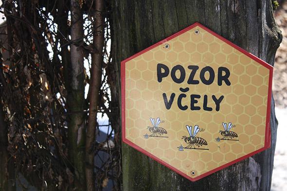 pozor včely