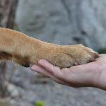 psí tlapka a lidská ruka