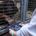 Seznamka pro orangutany