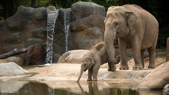 slonice zoo Praha