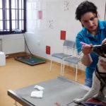 O zubní péči s veterinární stomatoložkou – 2. část