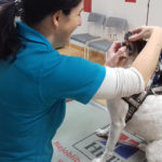 veterinární stomatoložka