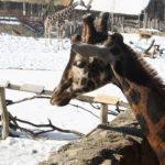 FOTO: Když v jihlavské zoo napadne sníh