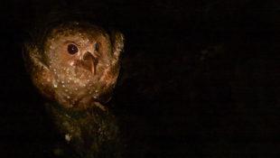 gvačaro v jeskyni