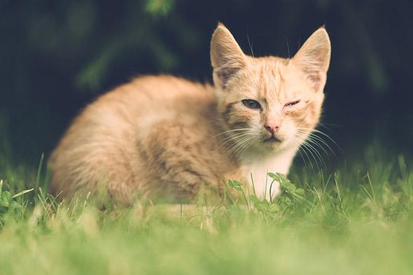 kočka s nemocným okem