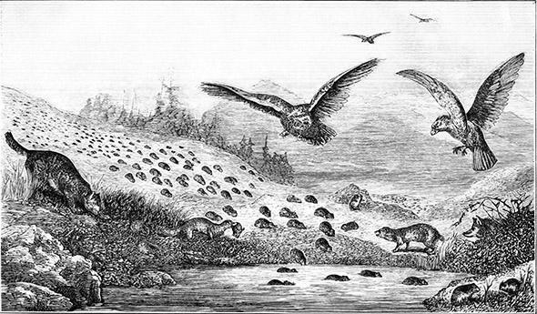 lumíci ilustrace z roku 1877