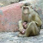 Novinky v zoo: ptactvo, primáti i hlodavci