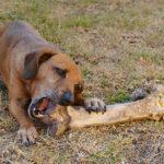 Může pes dostávat kosti?