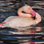 1. duben: Mezinárodní den ptactva