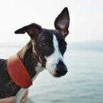 Má váš pes správný obojek?