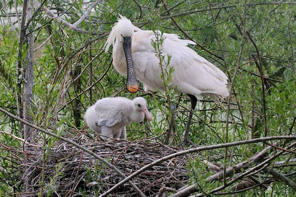 kolpík bílý zoo Hluboká