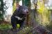 tasmánský čert Zoo Duisburg