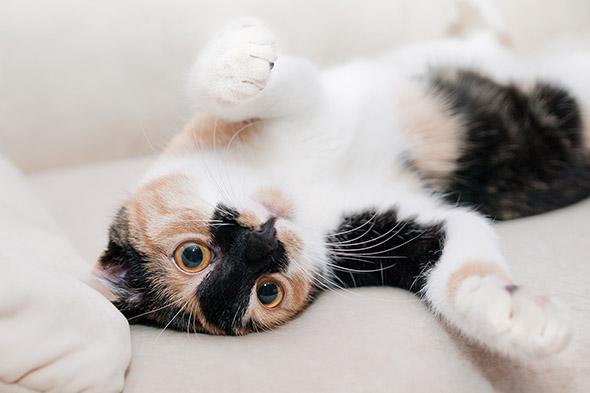 kočka na zádech