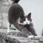 Proč se kočky tak často protahují?