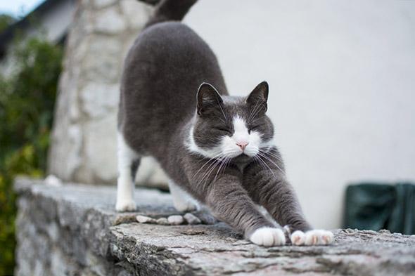 kočka se protahuje