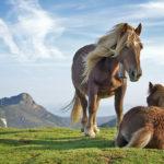 Spí koně vestoje?