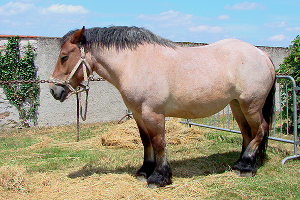 kůň spící ve stoje