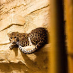 Novinky v zoo: nejen kočičí přírůstky