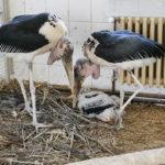 Novinky v zoo: vzácné zvířecí odchovy