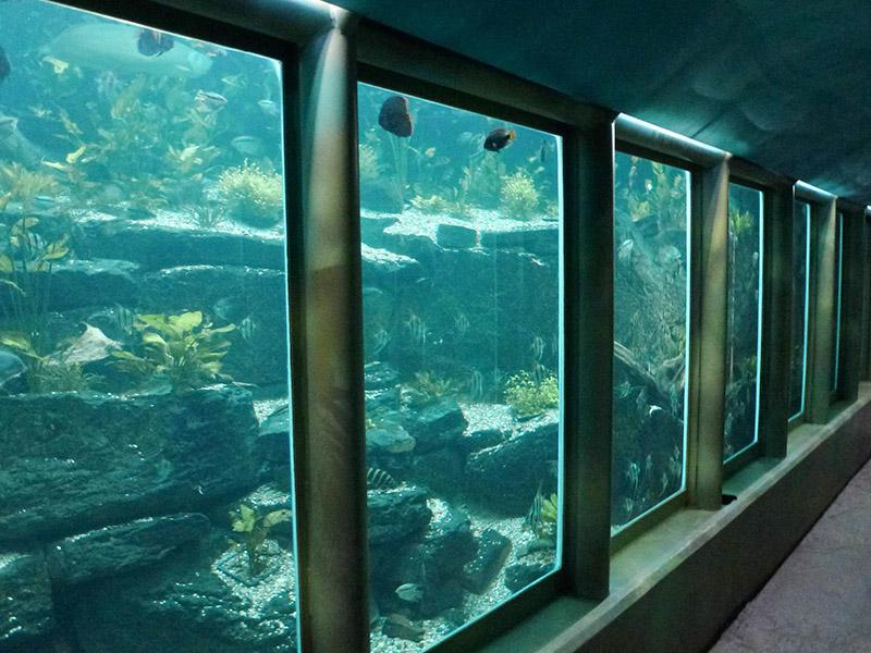 akvária ve skleníku Fata Morgana