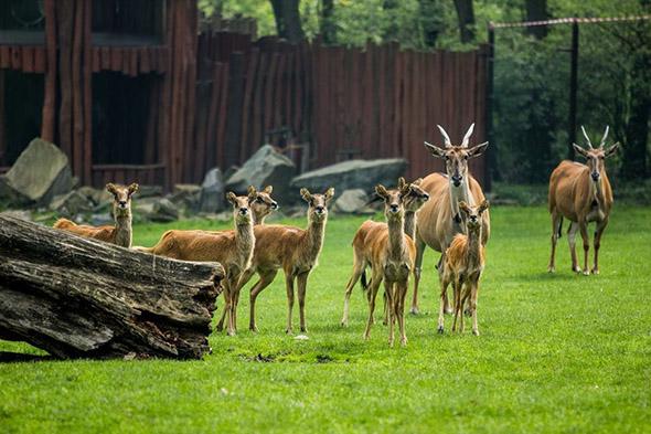 voduška abok zoo Ostrava