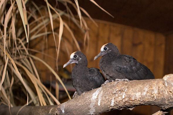 holub černobronzový zoo Praha