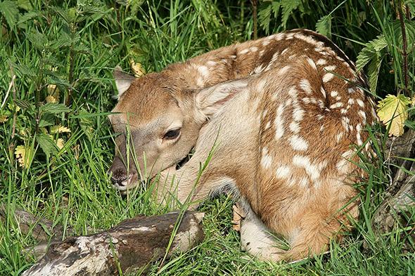 jelen bucharský mládě zoopark Chomutov