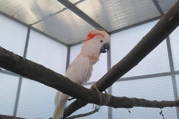 kakadu molucký zoo Tábor