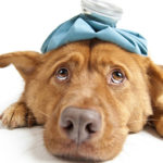 5 nejnebezpečnějších psích nemocí – 1. část