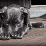 5 nejnebezpečnějších psích nemocí – 2. část