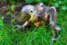 ara hyacintový mládě zoo Zlín