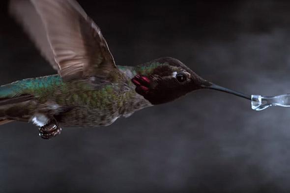 kolibřík ve slow motion
