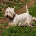 Proč pes hrabe nohama po vykonání potřeby?