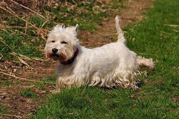 pes hrabe zadníma nohama