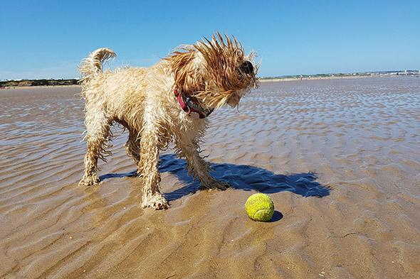 pes v létě