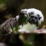Novinky v zoo: tamarín, pižmoň nebo morčák