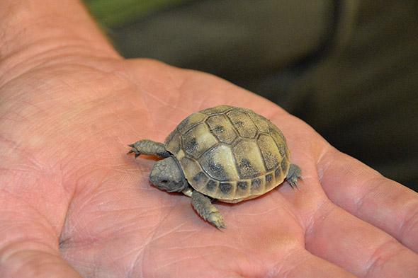 želva zelenavá mládě zoo Ústí