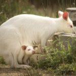 Novinky v zoo: pálení rohoviny a mládě vzácného gibona